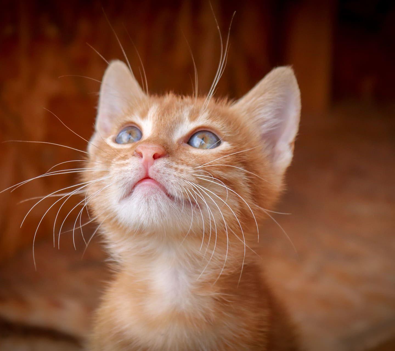 С любов, вашата котка!