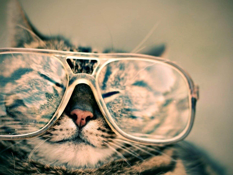 Няколко предимства на котките пред мъжете: